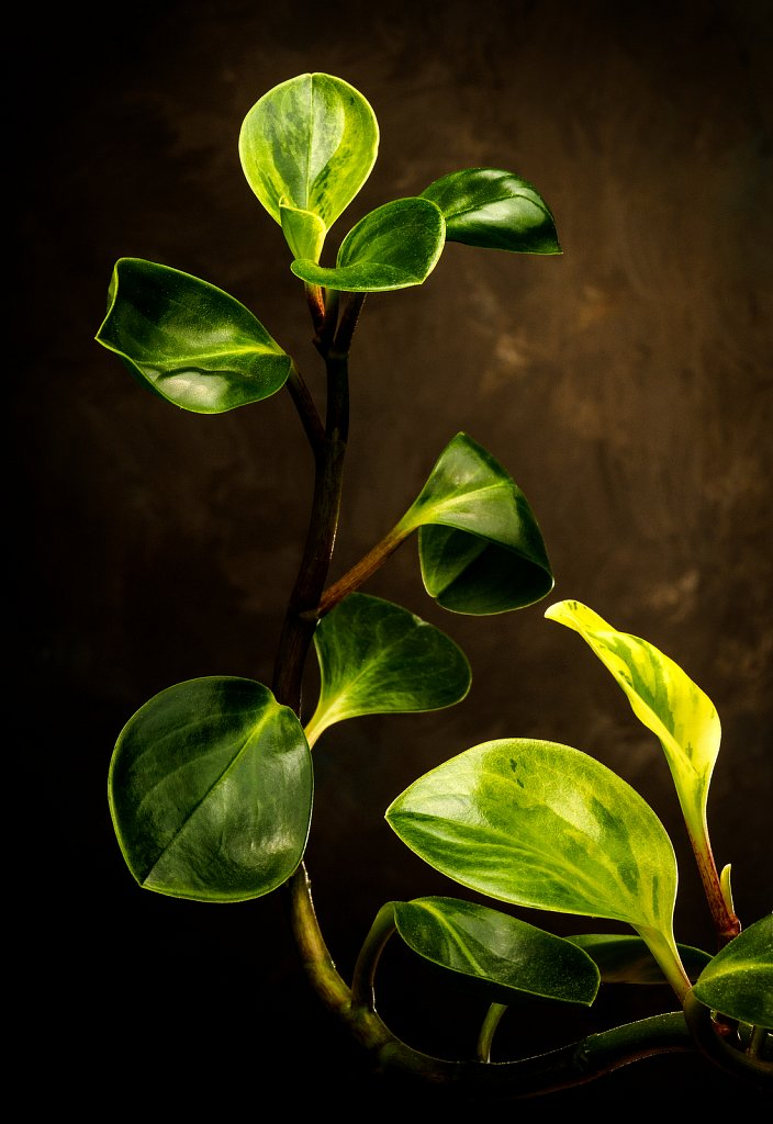 House Plant,  Muskego, Wisconsin