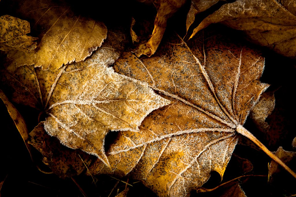 Leaves of Brown, Muskego, Wisconsin