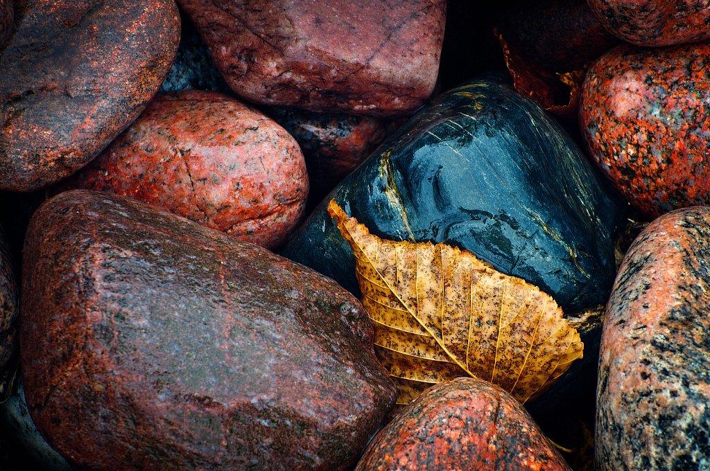 Golden Leaf and Stones, Lake Superior Provincial Park, Ontario, Canada