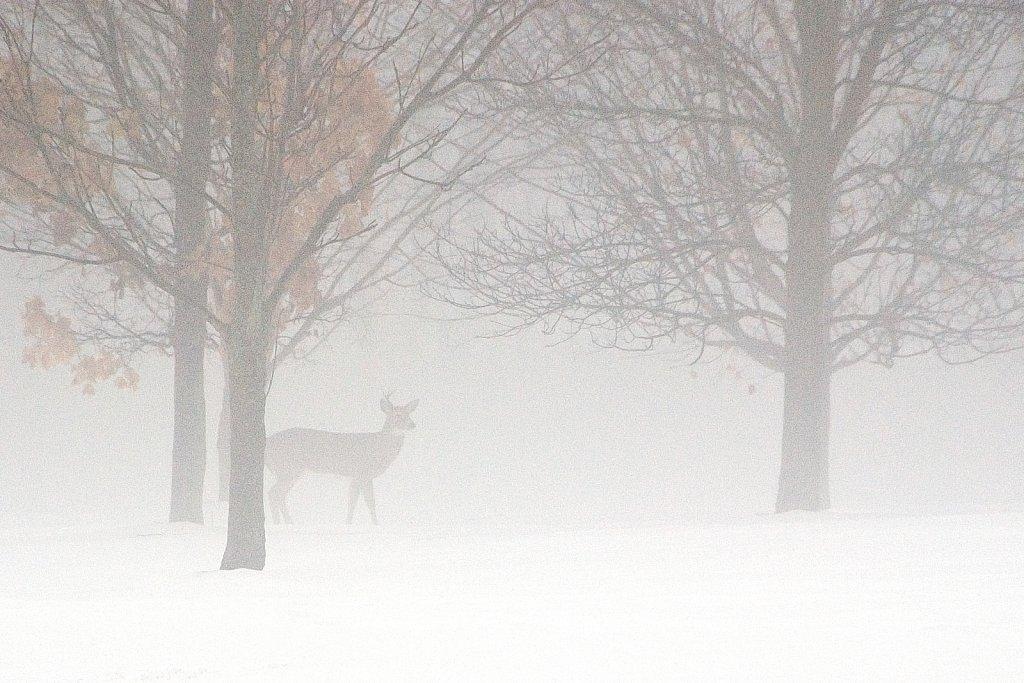 Mist-ical Deer,  Whitnall Park, Franklin, Wisconsin