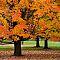Maple Grove, Whitnall Park, Franklin, Wisconsin
