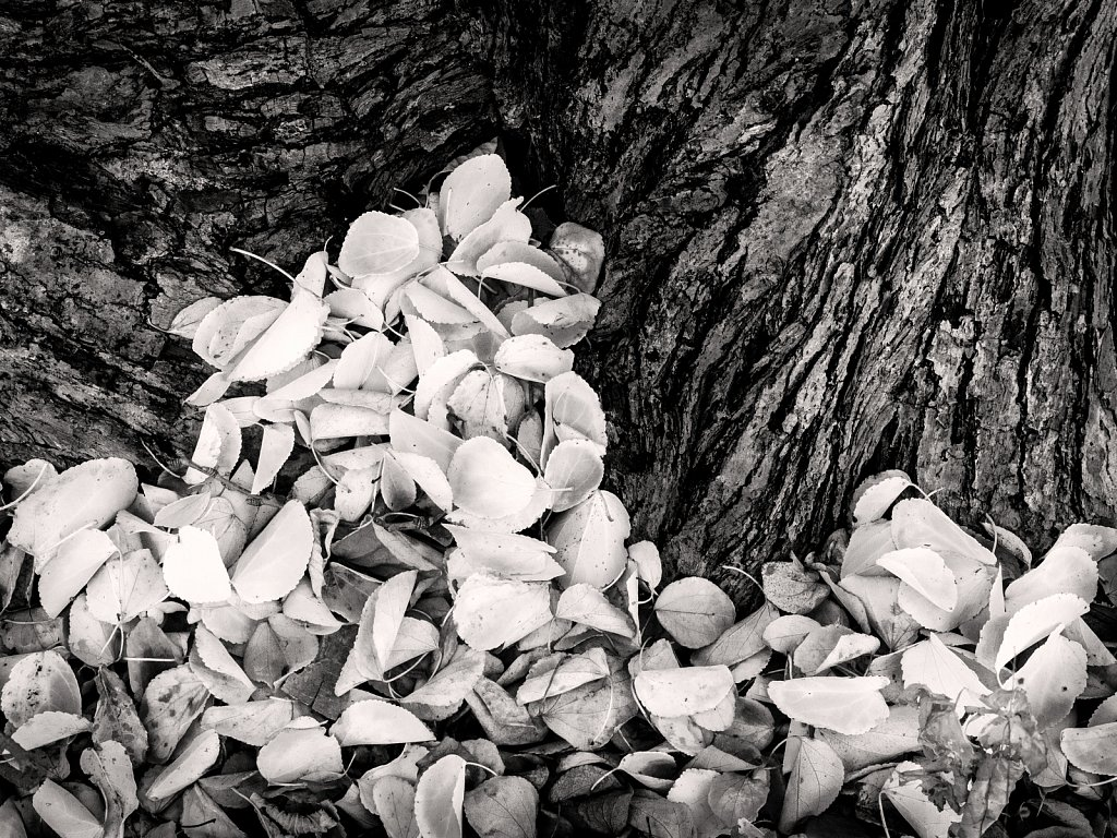 Tree Textures and Tones 1